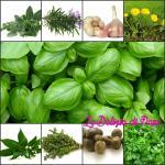 Erbe aromatiche e il loro uso in cucina