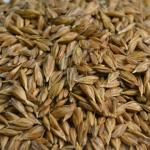la farina maltata o farina di malto diastasico