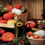 Le Ricette del Cuore - Seconda classifica novembre 2015