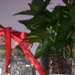 Panettone maestro morandin di saretta - ricetta passo passo