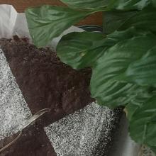 Brownies super cioccogolosi