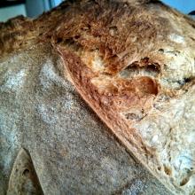 Pane semplice di semola rimacinata con licoli