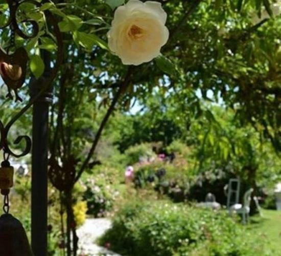 Il mondo dei fiori